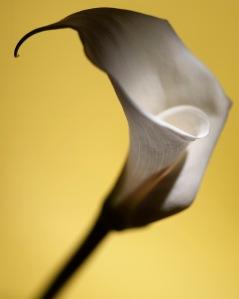 Kalla gul