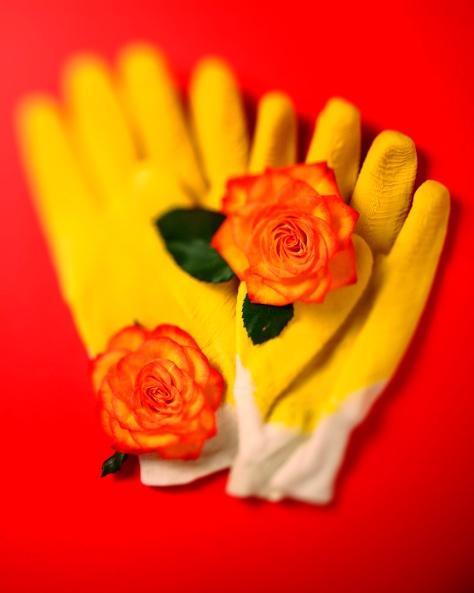 Gul handske på rött kopia