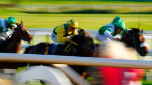 Galopp_MG_0302