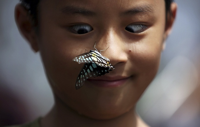 A butterfly perches on a boy's face at a butterfly exhibition Photograph: China Stringer Network/Reuters